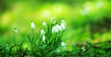 voorjaarskriebels
