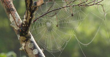 spinnenwebben in de ochtend